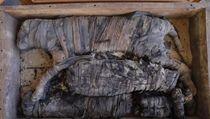 Mumi Singa Superlangka Ditemukan