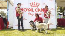 Dinas Peternakan Malang Sebut Belum Ada Larangan Makan Daging Anjing