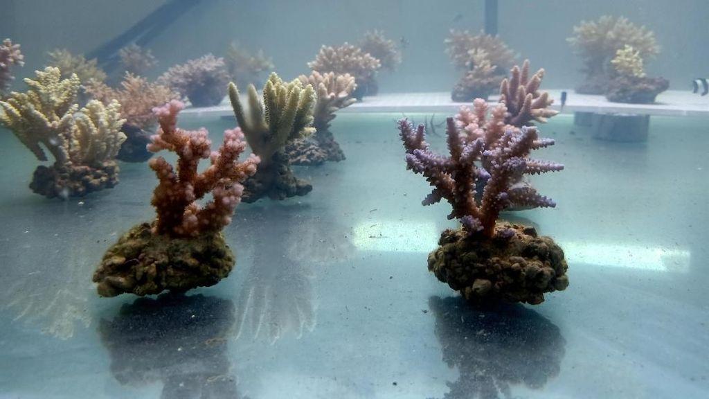 Peneliti Temukan Biota Baru di Perairan Bali
