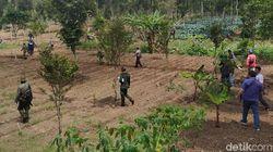 150 Hektare Lahan Cagar Alam Kamojang Beralih Fungsi Jadi Kebun
