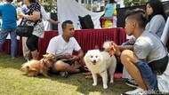 Di Malang Raya, Daging Anjing Dijual Ratusan Ribu Rupiah