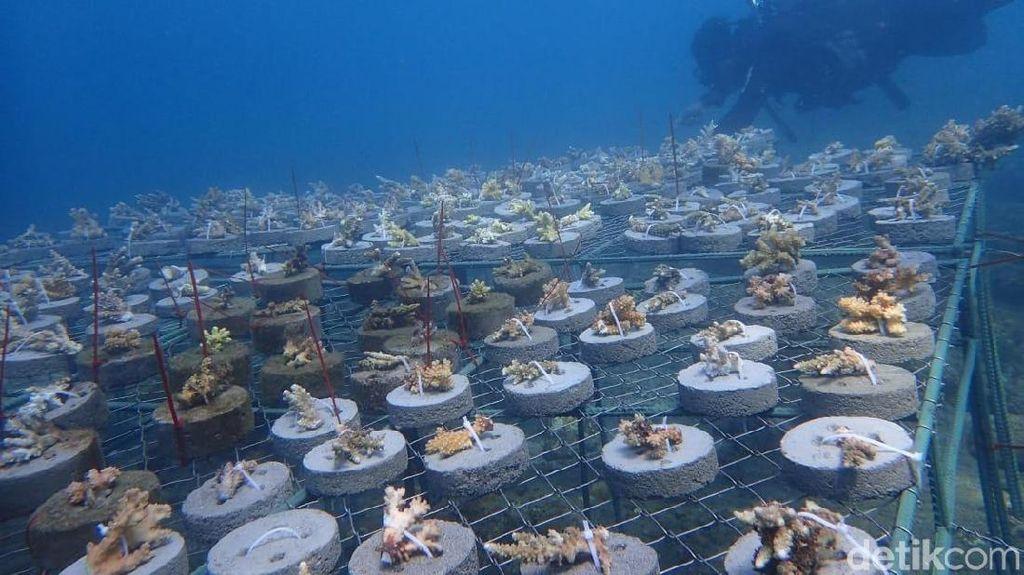 Keren! Puluhan Biota Baru Ditemukan di Perairan Bali Utara