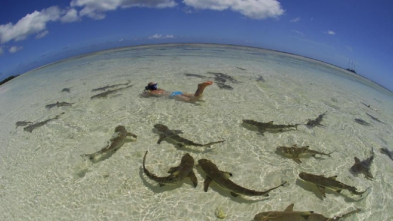 Ilustrasi hiu (iStock)