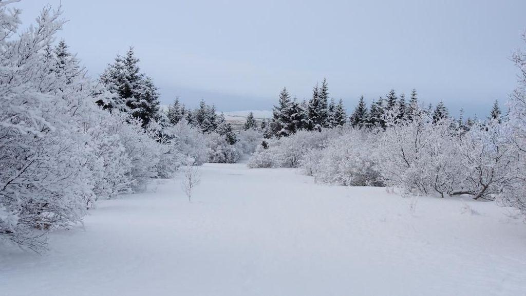 Ini Cara Liburan Hemat ke Islandia, Negeri Beku Bak Film Frozen II