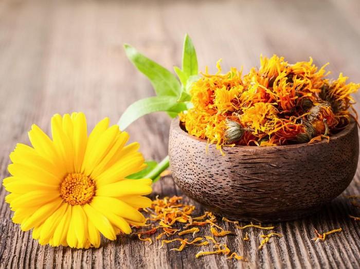 Ini Manfaat Bunga Calendula Yang Sering Ditemukan Di Skincare
