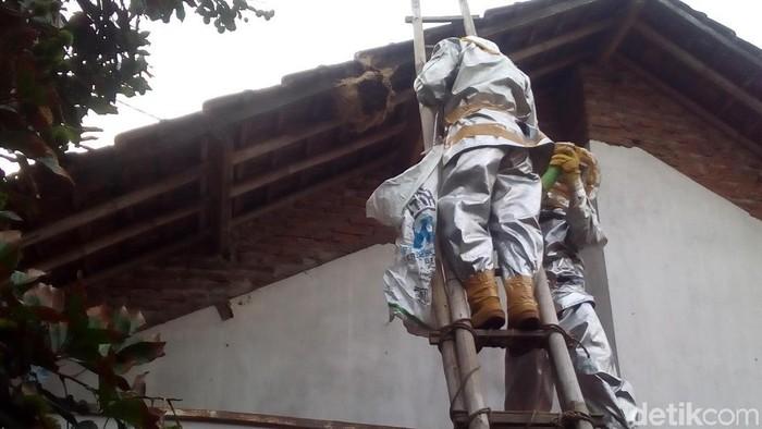 Ilustrasi evakuasi tawon vespa. Foto: Akrom Hazami