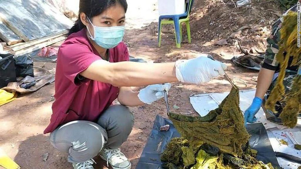 Kasihan! Seekor Rusa Liar Mati dengan Sampah Plastik 7 Kg di Perutnya