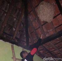 Sarang tawon di rumah warga dievakuasi oleh relawan.
