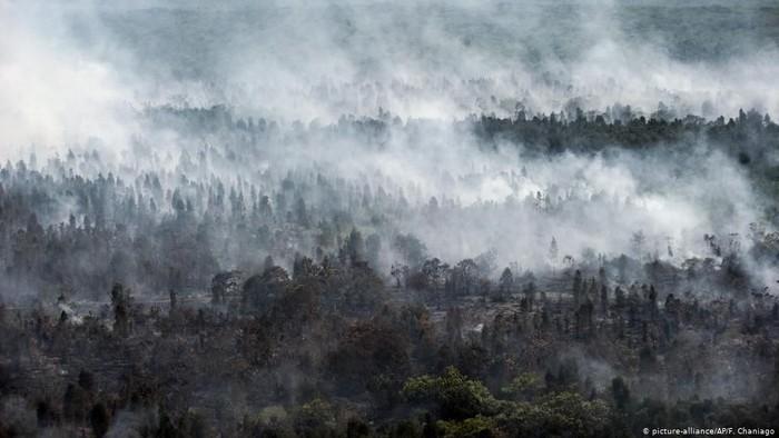 Ilustrasi kebakaran hutan /Foto: DW (News)