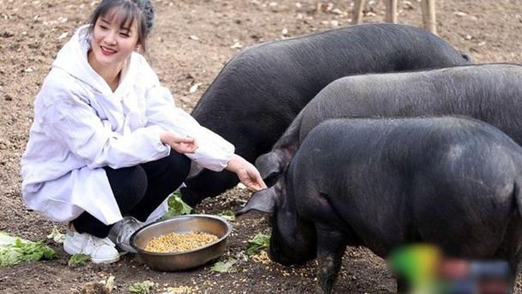Ayah Ini Akan Beri 300 Babi untuk Pria yang Mau Nikahi Putri Cantiknya