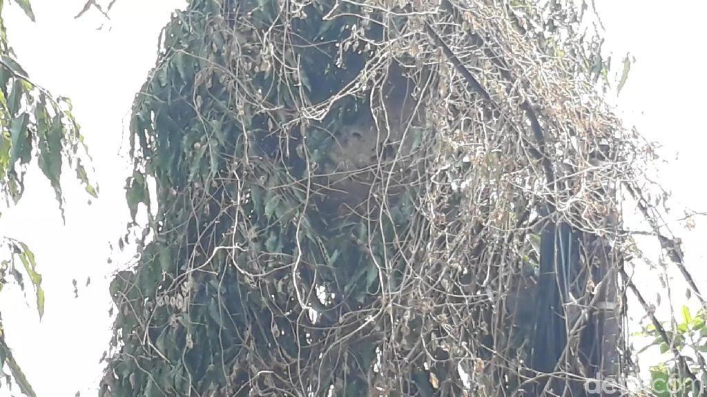 Dalam Sepekan, Damkar Brebes Musnahkan 39 Sarang Tawon Vespa