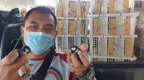 BKSDA Serang Amankan Selundupan Burung Dilindungi dari Sumsel