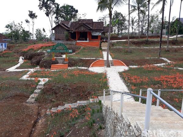 Pengunjung harus menunggu hingga bulan Desember untuk menikmati keindahan dan berfoto ria di kebun Bunga Amarilis, Kecamatan Patuk, Gunungkidul. Bunga tersebut tak kunjung bermekaran karena kurangnya intensitas hujan (Foto: Pradito Rida Pertana/detikcom)