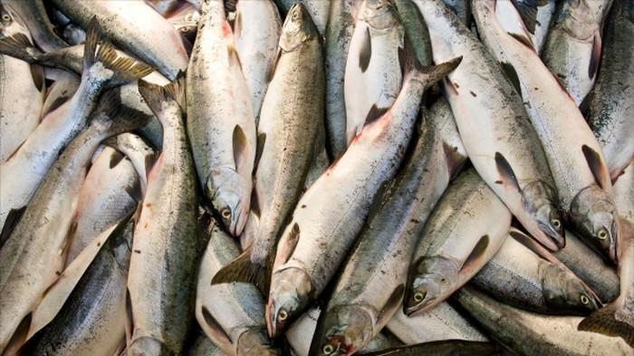 Konsumsi ikan per kapita di Indonesia masih relatif rendah