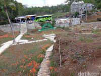 Banyak wisatawan kecele saat berkunjung ke kebun bunga amarilis