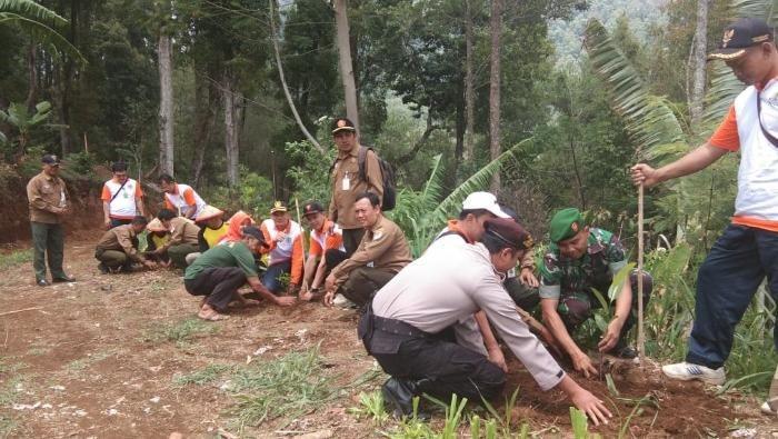 Bibit ditanam di hutan Gunung Lawu yang terbakar (Foto: dok. Istimewa)