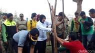 Sambut Piala Dunia U-20, Risma Tanam 1.000 Pohon Tabebuya di GBT