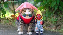 Aksi Lucu Kucing & Spiderman yang Bikin Gemas