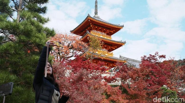 Diperkirakan, pekan ini merupakan puncak musim gugur (autumn) di Kyoto, Jepang. yuk lihat.