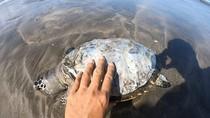 Bangkai Penyu Ditemukan di Pantai Kuta