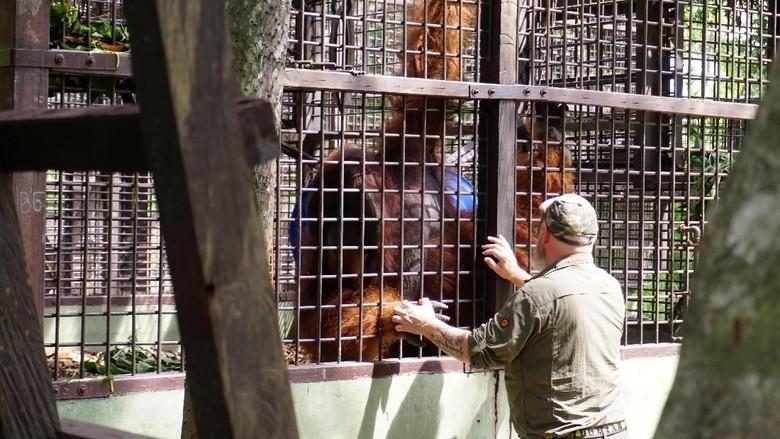 Pusat Suaka Orangutan Arsari Diresmikan