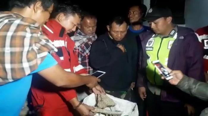 Petugas Damkar Kabupaten Sukabumi mengevakuasi sarang tawon vespa di Desa Tenjoayu. (Syahdan Alamsyah/detikcom)