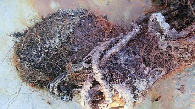 Tali dan jaring ditemukan di dalam perut paus sperma yang terdampar