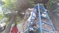 Resahkan Warga, Sarang Tawon Vespa di Kota Mojokerto Dievakuasi
