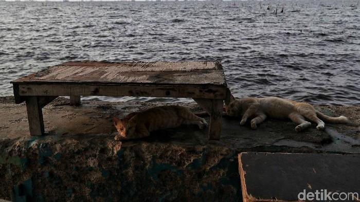 Sejumlah warga beraktiftas di kawasan Pantai Marunda yang terdampak Rob, Selasa (3/12). Kota Jakarta diprediksi akan tenggelam di tahun 2050, atau bahkan lebih cepat. Beberapa kajian menyebutkan bahwa di Jakarta Utara penurunan permukaan tanah mencapai 7,5-18 cm per tahun.