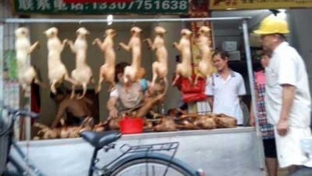 Sadis! Warga China Konsumsi Kucing dan Kulitnya Dijadikan Jaket