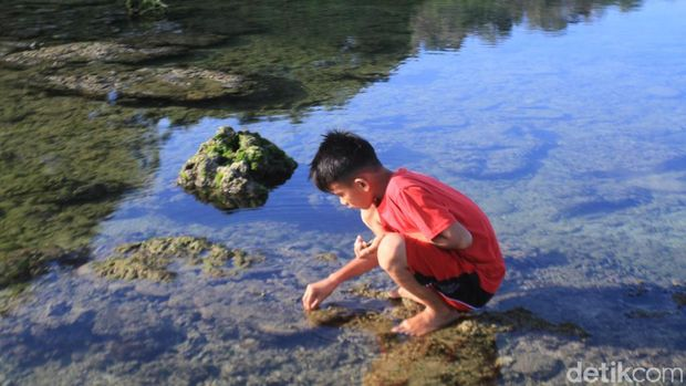 Mencari Si Umang, Penghuni Asli Pantai Pangandaran