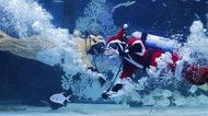 Aksi Sinterklas-Putri Dayung Sambut Natal di Akuarium Seoul