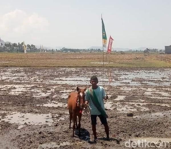 Untuk dapat melihat dan menyaksikan keseruan pacuan kuda lumpur ini, Anda bisa hadir pada sore hari di lokasi kegiatan, aksesnya sangat mudah karena berada tepat dipinggirkan jalan raya Bima Sumbawa. (Faruk Nickyrawi/detikcom)