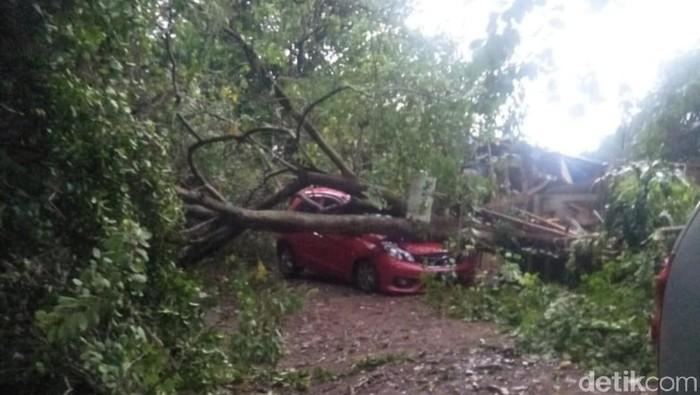 Foto: Pohon tumbang timpa mobil di Bogor. (Farhan-detikcom)