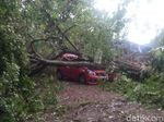 Hujan Lebat, Pohon Tumbang Timpa Mobil di Bogor
