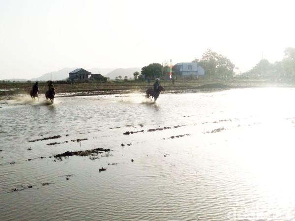 Di tahun 2019 ini, event pacuan kuda lumpur digelar untuk ketiga kalinya. Pesertanya pun datang dari berbagai daerah seperti dari Kabupaten Sumbawa, Kabupaten dan Kota Bima serta Kabupaten Dompu sendiri. (Faruk Nickyrawi/detikcom)