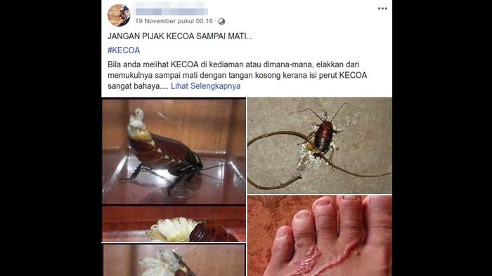 Informasi bahaya cacing bila menginjak kecoa viral lagi. (Foto: Tangkapan layar Facebook)
