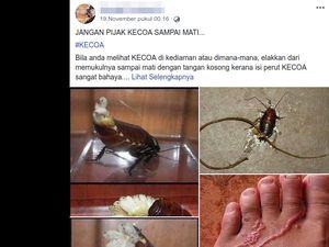 Viral Bahaya Injak Kecoa Bikin Cacing Masuk ke Kulit, Ini Faktanya