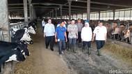 Ini Langkah Khofifah Kurangi Impor Susu di Jawa Timur