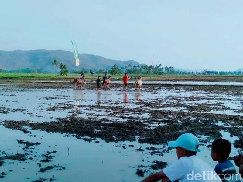 Jika Sumbawa Barat memiliki Barapan Kebo atau karapan kerbau yang diperlombakan di areal sawah yang berlumpur, maka di Dompu, Nusa Tenggara Barat (NTB) memiliki Pacuan Kuda Lumpur. (Faruk Nickyrawi/detikcom)