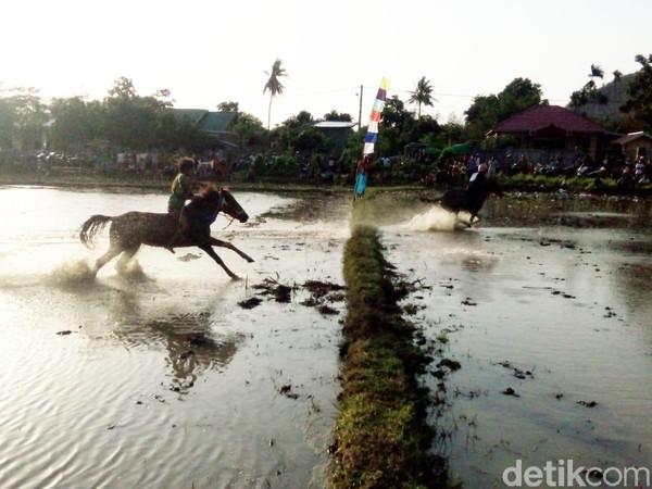 Pucuan kuda lumpur ini cukup ekstrim, karena para joki tidak mengenakkan alat pengaman lengkap. Meski begitu, jika terjatuh maka jatuh di lumpur. (Faruk Nickyrawi/detikcom)