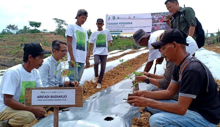 Perwakilan PT Royal Lestari Utama (RLU) perusahaan pengelola Hutan Tanam Industri (HTI) karet Arifadi Budiarjo (pakai kemeja berkaca mata) bersama para petani binaan melakukan penanaman perdana bibit sayuran di Desa Napal Putih, Tebo-Jambi. Foto: dok. RLU