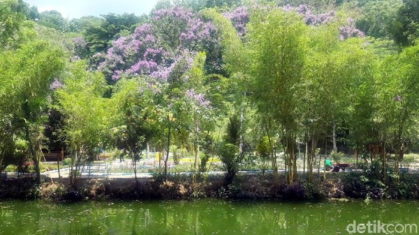 Hutan bambu di Boon Pring berasal dari warisan nenek moyang yang dilestarikan hingga kini. Bahkan ada penjaga bambu bernama waker, yang statusnya hampir sama dengan perangkat desa. (Hilda Meilisa/detikcom)