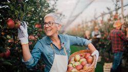 5 Makanan yang Baik Dikonsumsi Orang di Atas 50 Tahun