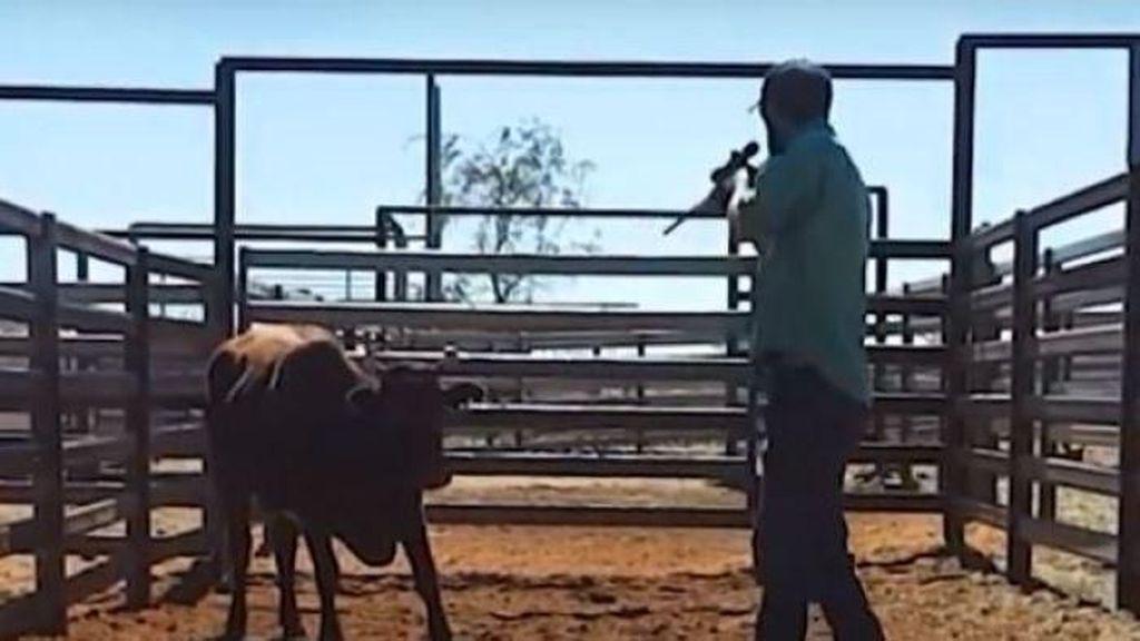 TV Israel Siarkan Rekaman Perlakuan Kejam terhadap Ternak di Australia Barat