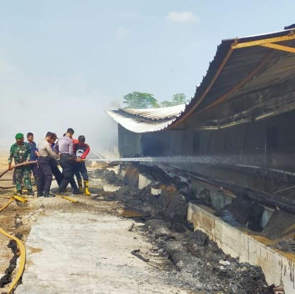 Gudang PT Japfa Pasuruan Terbakar, Kerugian Capai Rp 1,3 M