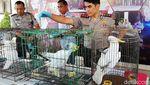 Buaya Hingga Trenggiling Diamankan Polisi di Pasuruan