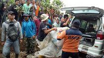 Petani Tewas Diterkam Harimau, BKSDA: Ada 4 Ekor di Pagaralam-Lahat