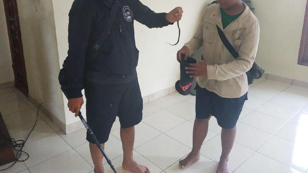 Pawang Cari Induk Kobra di Perumahan Citayam, Tangkap Anak Ular di Musala