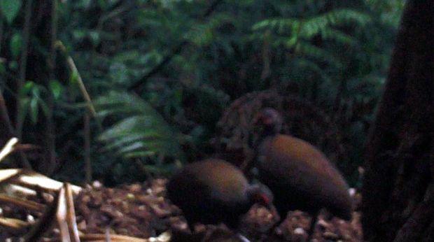 Spesies Burung Langka Terekam Kamera di Taman Nasional Bantimurung!